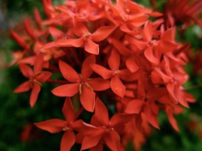 justflowers_12.jpg