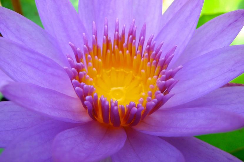 justflowers_20.jpg